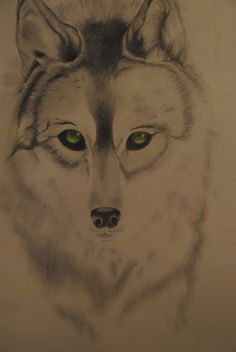 Dibujo lobo