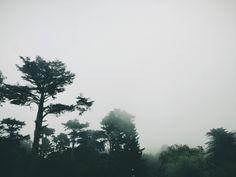 California Trees | Brett Sheffield Photography