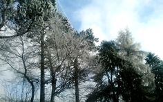Trees in the winter Trees, Mood, Pure Products, Winter, Outdoor, Design, Winter Time, Outdoors, Tree Structure