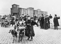 Dogs were given many roles within armies during World War One, including drawing carts containing machine guns and supplies for the Belgian army, as troops left for the front line in October 1914 ( 962 x 704 )