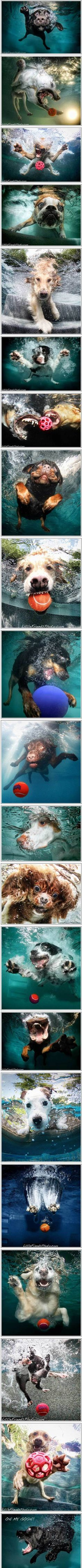 Dogs in the water.
