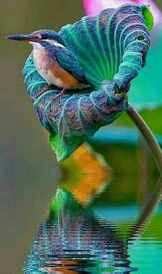 Find and save ideas about Colorful birds, Pretty birds, Beautiful birds and Tropical birds. Nature Animals, Animals And Pets, Cute Animals, Funny Animals, Pretty Animals, Forest Animals, Wild Animals, Beautiful Creatures, Animals Beautiful