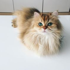 Smoothie the Cat Is the Most Photogenic Kitty in the World - BlazePress