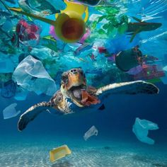 What is the Great Pacific Ocean Garbage Patch? | Tortue de ...
