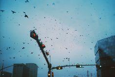 umbrellavein:  Tamara Lichtenstein