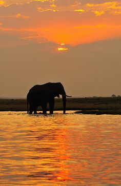 Sunset in Chobe National Park, Botswana  You can pet and take pictures with the animals here!