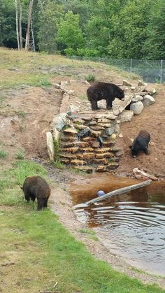 Oswald's Bear Ranch in Newberry, Michigan
