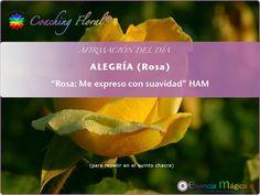 Si quieres recibir a diario la afirmación del día en tu mail, indícanoslo en info@esenciamagica.com. Gracias. Para conocer más sobre la Rosa(Alegria), pincha aquí