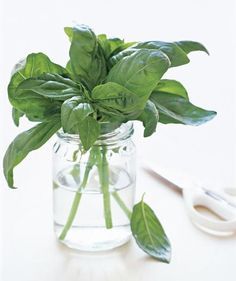 Use Mason Jars to Keep Basil Fresh | Got a few of those seemingly ubiquitous glass containers on your hands? Don't can them: Put them to use.