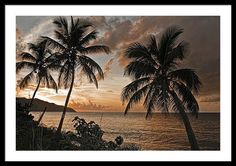 "We are happy. Denise Bennerson, photographer sold a beautiful 36.000"" x 23.875"" print of Vi Sunset On Cane Bay on Fine Art America. It is beautiful.     #virginsilandsphotographer #fineartamerica #canebay #stcroixvi  #denisebennersonphotographer #vipalmtrees #sunsetphotos #sunsetphotography #sunsetphotos #caribbean   http://www.homelandcollections.com/ http://goo.gl/zkmTAv"