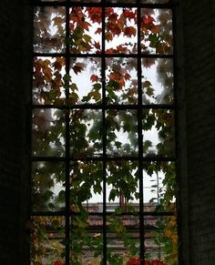 Autumn leaves in the window.