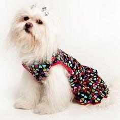 Vestido Fantasy Vermelho e Rosa Pickorruchos - MeuAmigoPet.com.br #petshop #cachorro #cão #meuamigopet