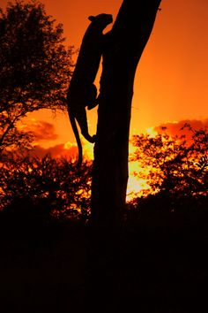 Amazing. Sunset on the banks of the Dudley River in Londolozi, South Africa. By Cameron Appel