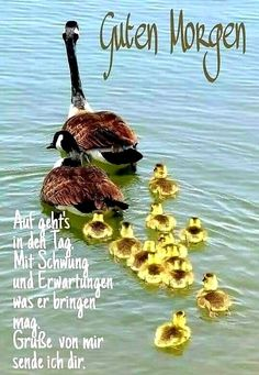 (notitle) - sayings - # SPEECHES - good morning sunday - cute food diy garten witzig Best Hair Loss Products, Aussie Hair Products, Colored Highlights, Beautiful Birds, Female Art, Pet Birds, Most Beautiful Pictures, Good Morning, Kitten