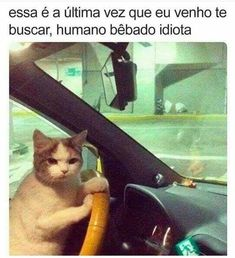 35 Funny cat memes with pictures that feature funny captions and remarks supplied by humans. Scanning for a laugh? Get a looks at these funny cat memes that deal among all kinds of funny topics. Memes Humor, Funny Animal Memes, Funny Relatable Memes, Funny Cats, Funny Animals, Jokes, Funny Humor, Funny Shit, Hilarious