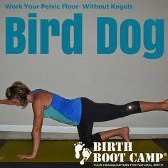 Bird dog strengthen the pelvic floor