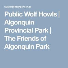 Public Wolf Howls   Algonquin Provincial Park   The Friends of Algonquin Park