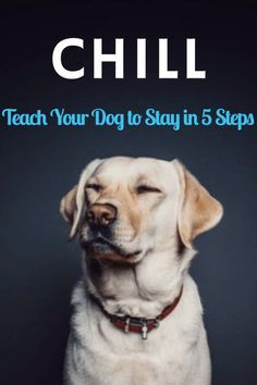 How to train your dog to stay.