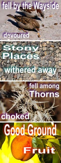 Parable of the Sower - Matt. 13:3-8  #lds #mormons #Bible