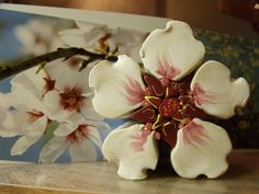 #7 almond blossom cane with petals, via Flickr.