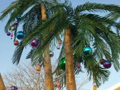who is going to climb the palm trees?