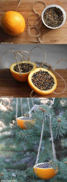 rx online Great for Orange Bird Feeder: 1 orange; 4 pieces of string cut into Great for Orange Bird Feeder: 1 orange; 4 pieces of string cut into lengths; bird seed ~ With a sharp knife,… Continue Reading →