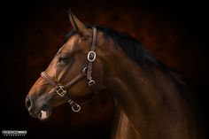 Horse Photos, Horses, Fine Art, Pets, Amazing, Animales, Pictures Of Horses, Equine Photography, Horse Photography