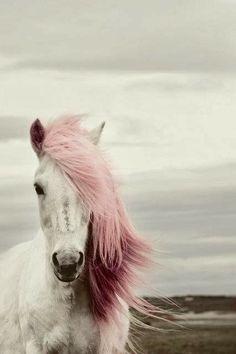 La Boheme #beautifulhorsepink