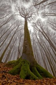 "Have a look to our Pinterest board ""Go back to wonder"" http://pinterest.com/treenation/go-back-to-wonder/ (Photo from our user parales) www.tree-nation.com"