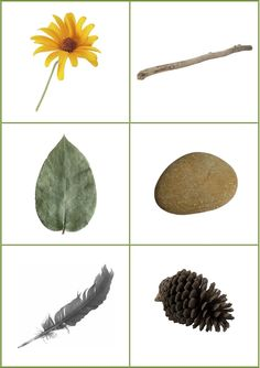 the perfect nature scavenger hunt!