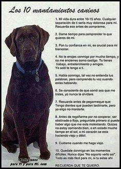 Los 10 Mandamientos Caninos