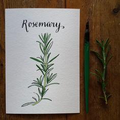 Rosemary :: www.AliceDrawsTheLine.co.uk