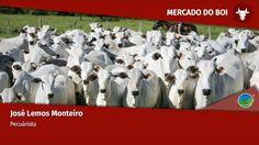 🔴 Notícias Agrícolas está ao vivo: AO VIVO: MERCADO DO BOI GORDO