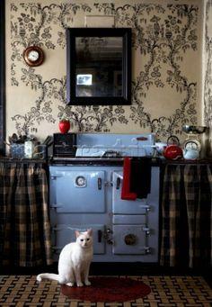 Blue oven cat