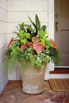 Container Gardening Ideas Shade pot: 'Wasabi' coleus Cast-iron plant 'Pink Beauty' caladium Variegated Algerian ivy Asparagus fern - This shade-loving combo adds color to any entry Cast Iron Plant, Pot Jardin, Asparagus Fern, Garden Stand, Container Flowers, Succulent Containers, Shade Plants Container, Front Yard Landscaping, Landscaping Ideas