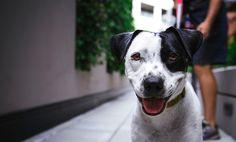 hacer turismo con perro