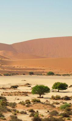Désert du Namib, près de Sossusvlei, en Namibie