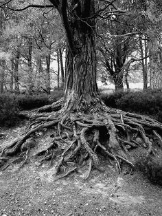 Ideas For Tree Roots Illustration Woods Pencil Art, Pencil Drawings, Art Drawings, Gravure Illustration, Tree Roots, Landscape Drawings, Painting & Drawing, Drawing Trees, Roots Drawing