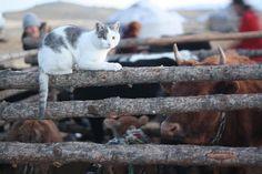 Mongolia    Cat Shepard
