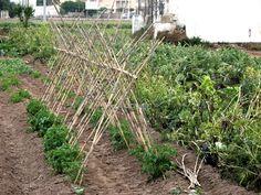 Conreu de tomata Valencia, Photo And Video, Plants, Vegetable Garden, Plant, Planets
