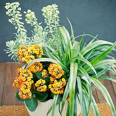 45 cool container gardens | Fireworks | Sunset.com