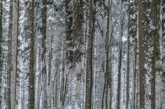 abstract natural forest