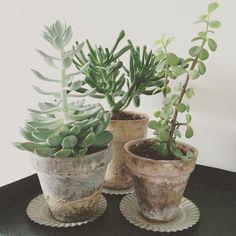 Vi er vilde med at bruge planter i indretningen, vis os, hvordan du bruger planter i din indretning. Tag dine billeder med #indretmedplanter Vi viser måske dit billede på madogbolig.dk