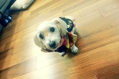 130926 Jjanggu for Chuseok Holiday Qualities In A Man, Bts Dogs, Bts Tweet, Bts Video, Dog Names, Bts Bangtan Boy, Cute Animals, Pets, Twitter Update