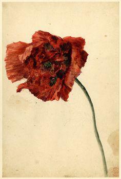 Jan van Huysum (Huijsum) (1682-1749) - Flower Study of a Poppy