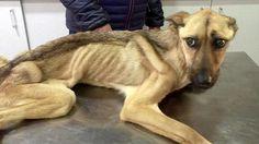 Un cane morto in giardino, dodici cani (di cui 10 cuccioli) in casa ... - MilanoToday - http://bit.ly/2qg9cpV - Pet Community and Social Network