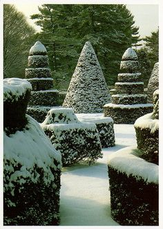 Longwood Gardens- Topiary Garden in Winter? or....Freshly sprinkled with powdered  sugar................just for our tasting!