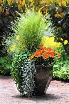 Creative spring garden pots and planters to inspire you right into spring. Perfect for your porch or on your table, these combinations are easy and beautiful. Container Herb Garden, Container Gardening Vegetables, Container Flowers, Container Plants, Container Size, Vegetable Gardening, Gardening Tips, Diy Garden, Spring Garden