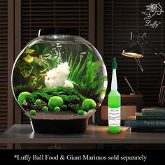Amazon.com : 5 LUFFY Shrimp Balls - Filters and Purifies Water: Provides Nutrients for Shrimps to Feed on: Perfect size for a Small Tank: Beautiful & Easy Care : Pet Supplies