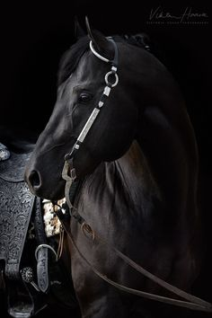 Beautiful stallion I was lucky enough to photograph for a client recently.